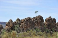 One surviving tree atop the rocks.
