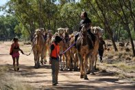 Camels being herded near Barcaldine.